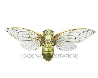 Gold Cicada Beetle Insect Bug Archival Colored Pencil Drawing Metallic Shiny Pretty Beautiful Art Print by Headspace Illustrations