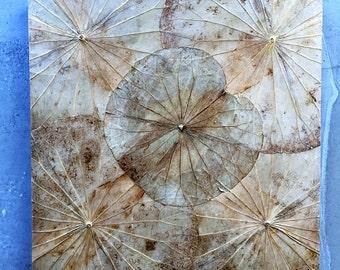 Lotus Leaf image, beige 48 x 48 x 4 cm