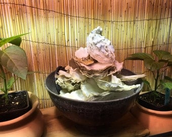 Oyster shell fountain