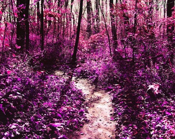 Surreal pink nature path photography print
