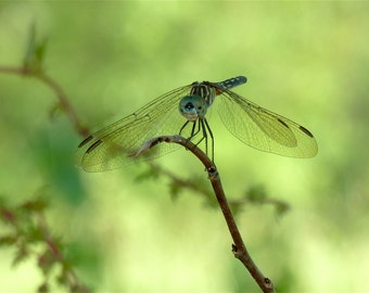 Dragonfly Series