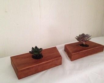 Maple succulent planter