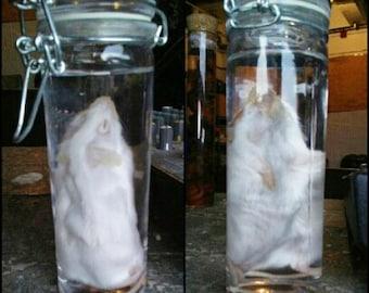 Mouse wet specimen jar