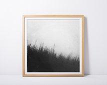 photography, wild grasses, fine art print, art and collections, nature, mist, blue, landscape