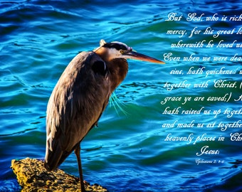 Birds Sing the Praises of God