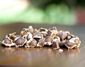 Moringa Seeds - Powerful Superfood - Grow Your Own - Organic Seed
