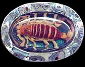 Scorpion with Abalone Shell Belt Buckle
