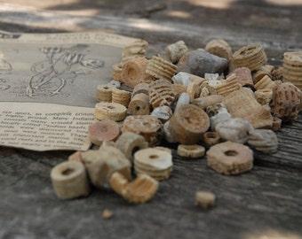 Crinoid, Indian Beads, Fossils, artifact - Lot 14