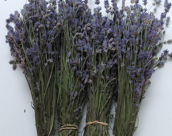 English Lavender bunches 600 stems