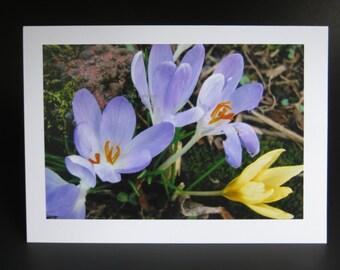 Photography card- crocus- Portland, OR