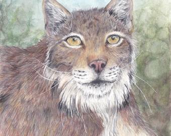 Original Lynx portrait