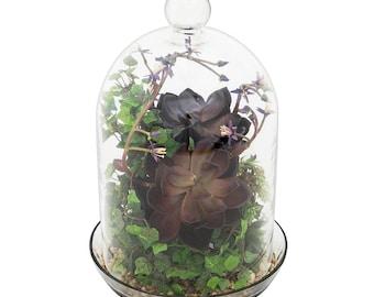 Bell Jar Terrarium II