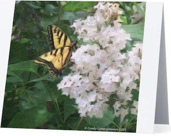 Butterfly Blank Notecard