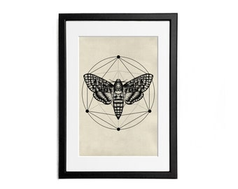 Moth Print illustration A4 Poster Wall Decor Naturalistic Illustration