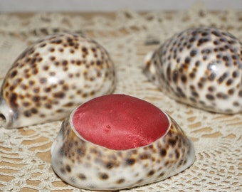 Antique cowrie  shell set  decorative cowrie  shells cowrie shell pin cushion
