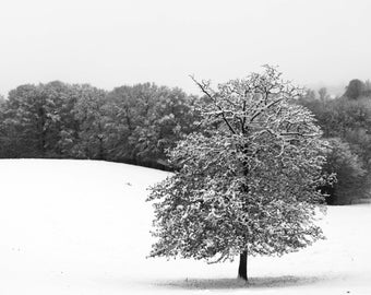 lonely tree II Limits black and white fine art photography