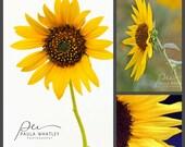 Sunflower decor, 3 photo set, gallery wall art, wall art set, sunflower wall art, sunflower art set, sunflower prints, sunflower photo