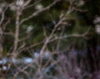 "Abstract Snowfall - 5 x 7""   Photographic Print"