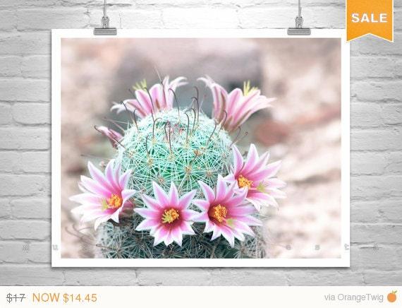Sale 15% Pink Flower, Desert Flower, Cactus Flower, Art Photography, Pastel Art, Arizona Art, Desert Art, Floral Art, Flower Art, Tucson