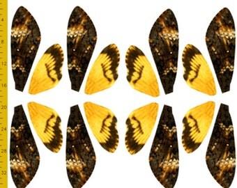 Medium Death's Head Moth Fabric for Halloween Costume Wings - 100% Cotton Woven