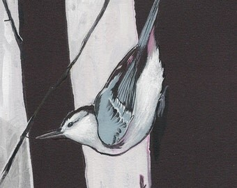 """White-Breasted Nuthatch - bird print, 6"""" x 6""""."""