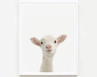 Baby Animal Nursery Art Prints. Lamb Little Darling. Animal Wall Art. Animal Nursery Decor. Baby Animal Photos.