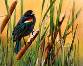 "Red-wing Blackbird in Cattails Original Watercolor - ""Tranquil Golden Perch"""