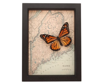 Framed Butterfly with Vintage Map of Maine