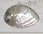 Beautiful Rare Pearlized Black Abalone shell