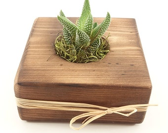Organic Natural Rustic Charred Wood Gift, Guest Favors - Succulent, Cactus, Haworthia, Air Plant, Mix - Wedding, Bridal, Baby Shower, Event