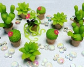 Tiny succulents and baby octopus
