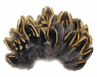 Chukar feathers, 10 Pieces - NATURAL BROWN Partridge Small Plumage Feathers : 3621