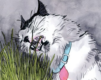 how to grow catnip grass