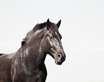 Black Horse, Minimalist Photograph, Color Photograph