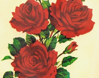 1 Bunch Of 3 RED ROSES Vintage Decals Transfer Floral Shabby Chic Furniture  Restoration Upcycle