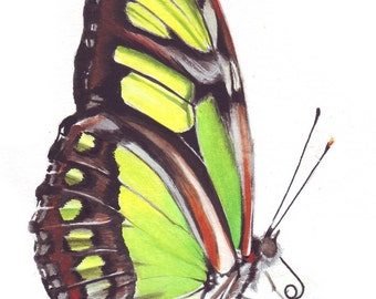 original watercolor painting / malachite butterfly / yellow green / butterfly study / art illustration / HM098