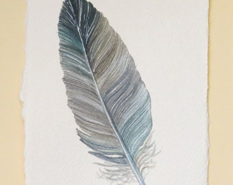 Original watercolour feather painting  illustration part of a series