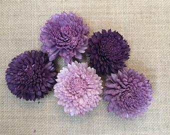 Sola zinnia flowers  -- SET of 30 -- Plum - Purple - Lavender