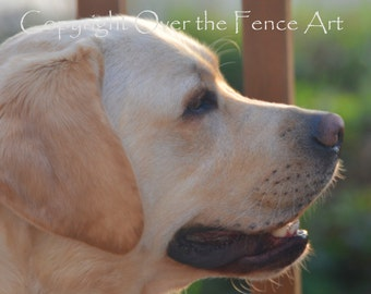 Note Card YELLOW LABRADOR Smiles at Sunset