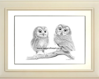 Twit and Twoo, owls, owl, owl art