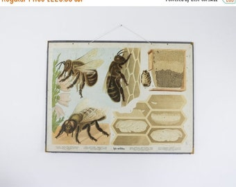 Vintage School Chart, Bees, Biology Chart