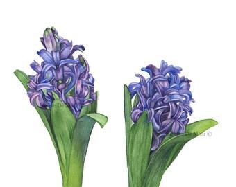 Hyacinth watercolor painting print, Hyacinth print, botanical art, wall art, purple flower wall art, 5 by 7 print, H4216