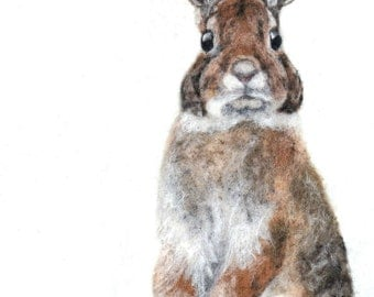 Curious Bunny Art Print - High Quality Giclee Print - 5x7, 8x10 & 11x14