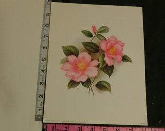 Pink Rose 1973 Scafa-Tornabene Art #1-866