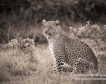 African Leopard Photo - Wall Art -  Leopard Photo, Childs room decor