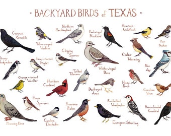 Texas Backyard Birds Field Guide Art Print / Watercolor Painting / Wall Art / Nature Print / Bird Poster