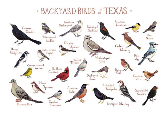 Free Pictures Of Texas Birds - Porn Website Name-7944
