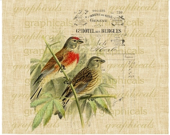 French decor Birds instant clip art graphic digital download image transfer for iron on burlap decoupage paper pillow tote 2285