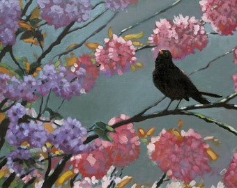 Beautiful Blackbird bird limited edition art print 'Blackbird Blossom' from an original oil on board by Heather Irvine individually signed
