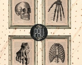 Set of 4 Bones Connected Vintage Anatomy Prints on Unframed Upcycled Bookpages